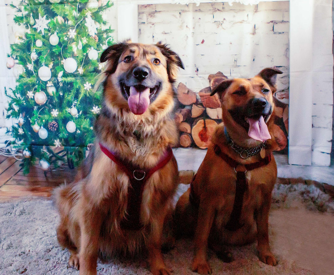 Click here to visit our Rescue Remedies Dogs Christmas